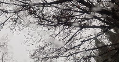 METEO:  Vreme rea, cu precipitații moderate cantitativ. 4 grade, temperatura maximă.