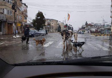 Haz de necaz pe străzile din Moreni. Cine are prioritate?