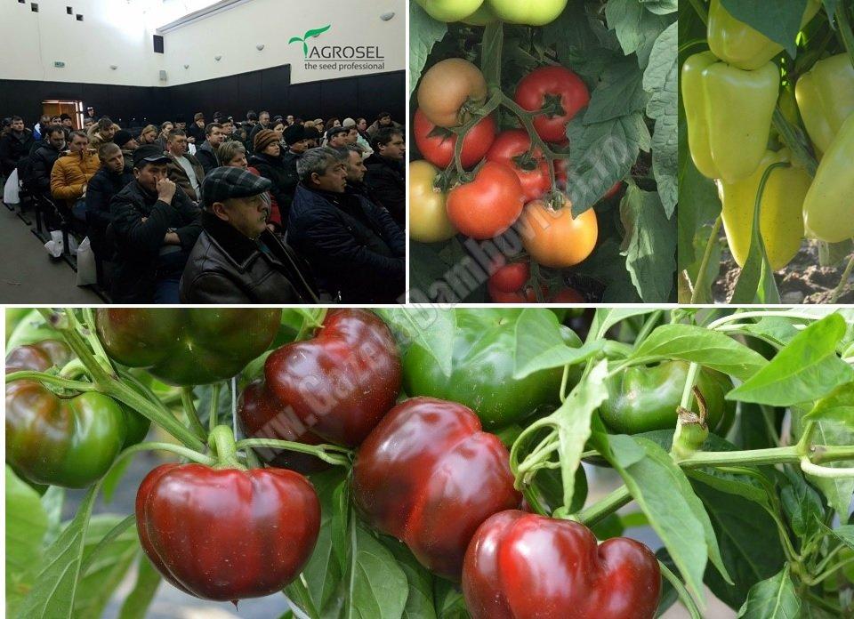 Agrosel prezintă, la Băleni, top 5 hibrizi de legume adaptați condițiilor climatice din România