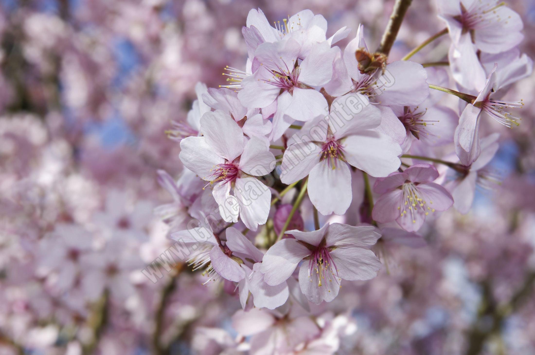 METEO:  Cum va fi vremea în Duminica Floriilor, în Dâmbovița
