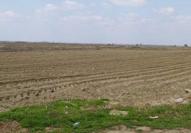 APIA Dâmboviţa: 10.000 de fermieri au fost autorizaţi la plata în avans