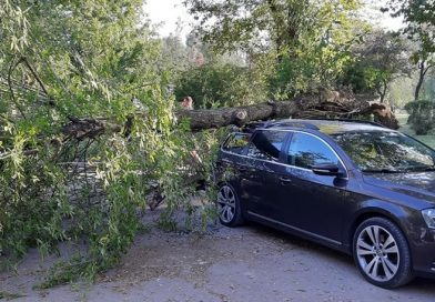 TÂRGOVIȘTE: Arbore căzut peste o mașină în Parcul Chindia