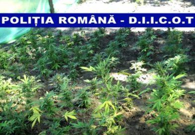 DIICOT DÂMBOVIȚA a destructurat un grup organizat în distribuția de droguri de mare risc în liceele târgoviștene