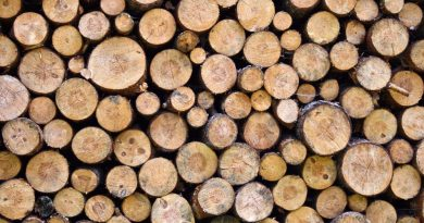 VALEA MARE: Fără permis, fără asigurare, căra lemne fără acte de proveniență