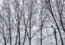 Vine iarna! Vremea va fi rece și este în vigoare un Cod Galben de ninsori
