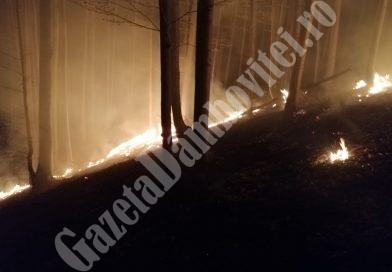 VIDEO – 20 de hectare de pădure ard la Iedera! Pompierii luptă cu zeci de focare, într-o zonă greu accesibilă