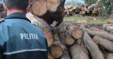IPJ DÂMBOVIȚA: Acțiune pentru prevenirea și sancționarea delictelor silvice