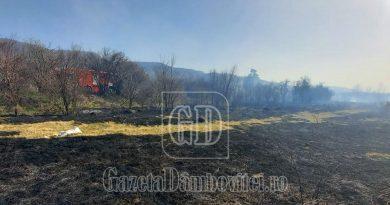 VIDEO: Incendiu de vegetație în comuna Voinești.