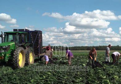 INFO: Noi condiții de muncă și cazare impuse românilor care muncesc, sezonieri, în Europa