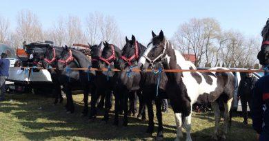 Crescători din întreaga țară și-au etalat caii la Ziduri (Odobești)