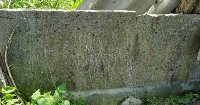 Dragomirești: Ursul a dat târcoale unui cimitir. Animalul nu se teme de zona locuită